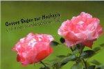 3er Päckchen Faltkarten - Gottes Segen zur Hochzeit und einen wunderschönen Tag