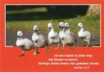 12er Päckchen Postkarten - Für die Faulen ist jeder Weg mit Dornen versperrt; Tüchtige finden immer .... [Sprüche 15,19]